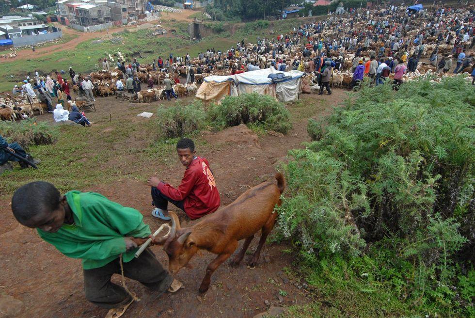 Contadino etiope fa causa alla cooperazione britannica