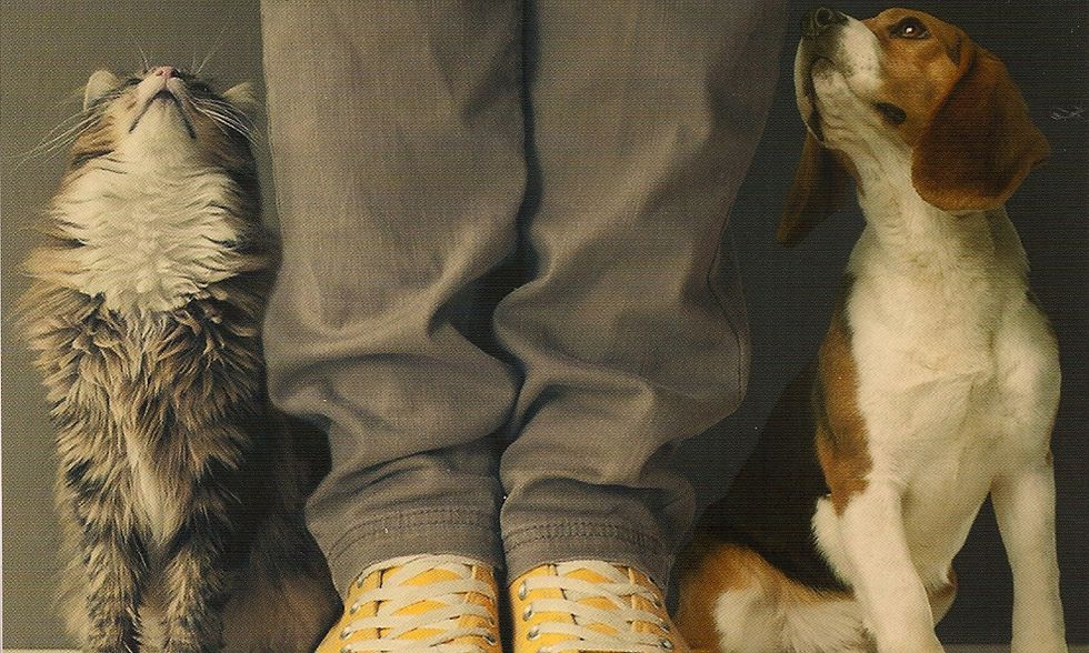 Paolo Maurensig, 'Amori miei e altri animali'
