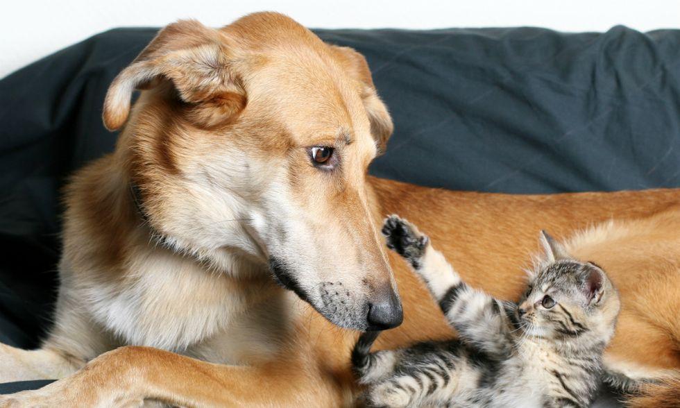 App-cani-gatti