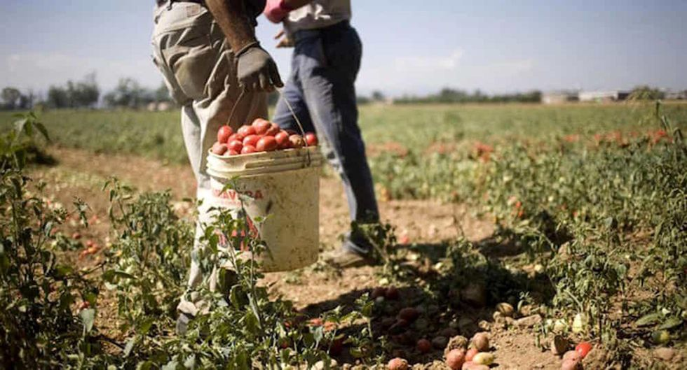 braccianti stranieri agricoltura