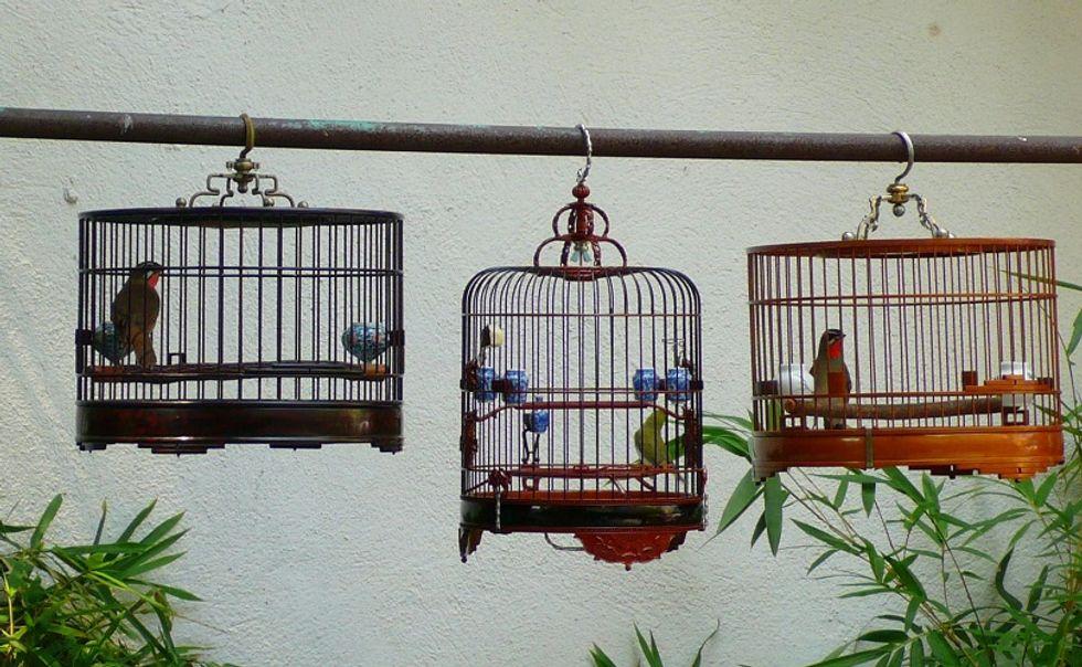La Cina, i piccioni, le Olimpiadi degli uccelli