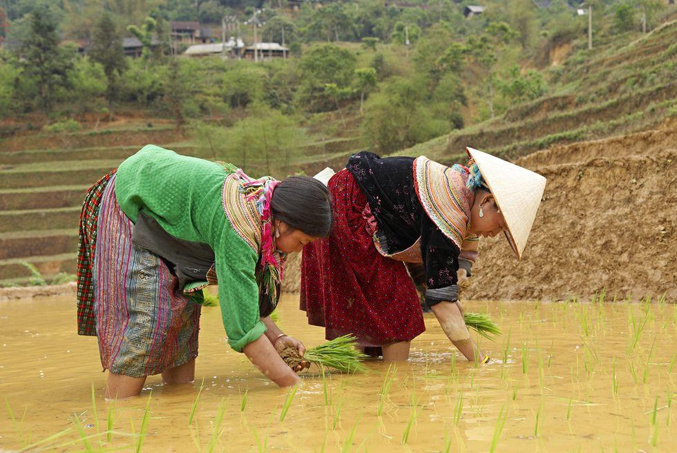 Vietnam: 3 libri per conoscerlo