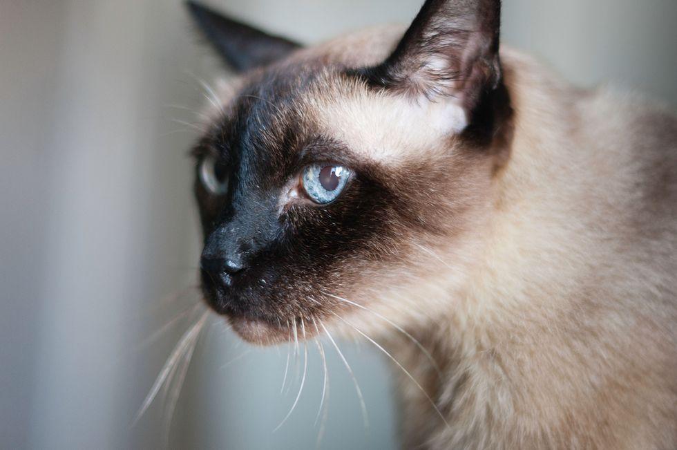 E' morto Scooter, il gatto più vecchio del mondo