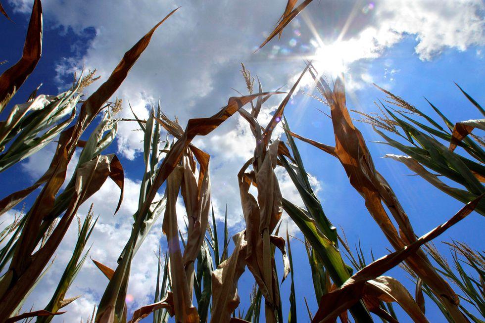 La siccità negli Stati Uniti: i campi prosciugati