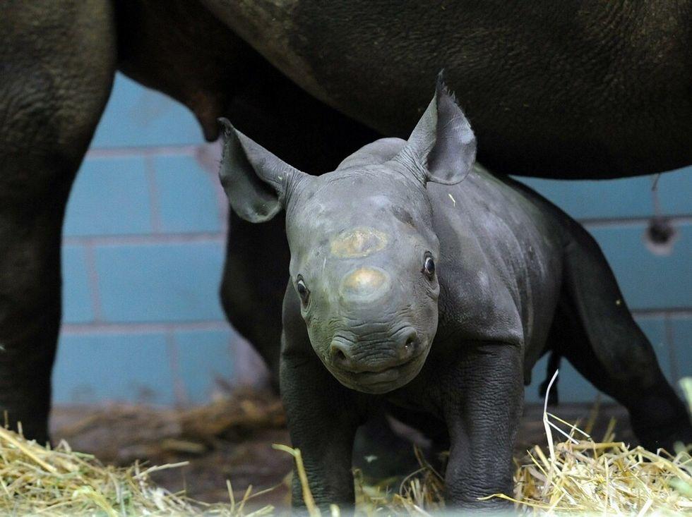 Noi, i rinoceronti dello zoo di Berlino e altre foto dal mondo