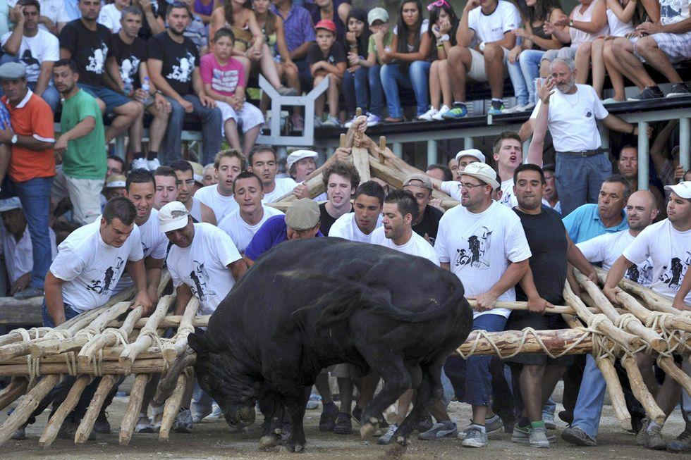 La capeia arraiana, corrida di gruppo