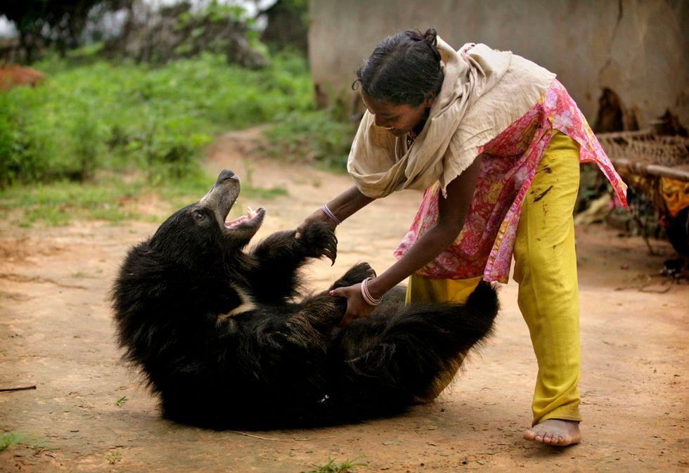 L'orso addomesticato Buddu è tornato nelle foreste