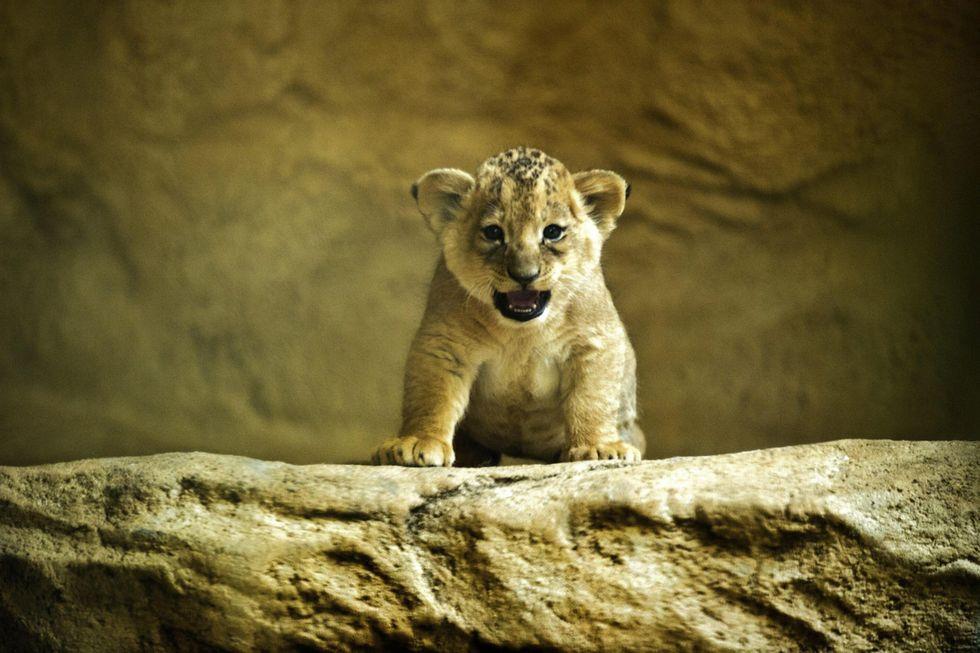 ANIMALI, le foto più belle di SETTEMBRE