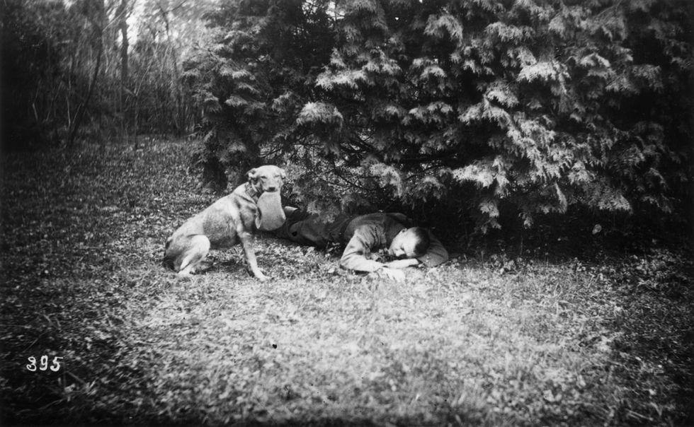 Uomini e animali alla Grande Guerra