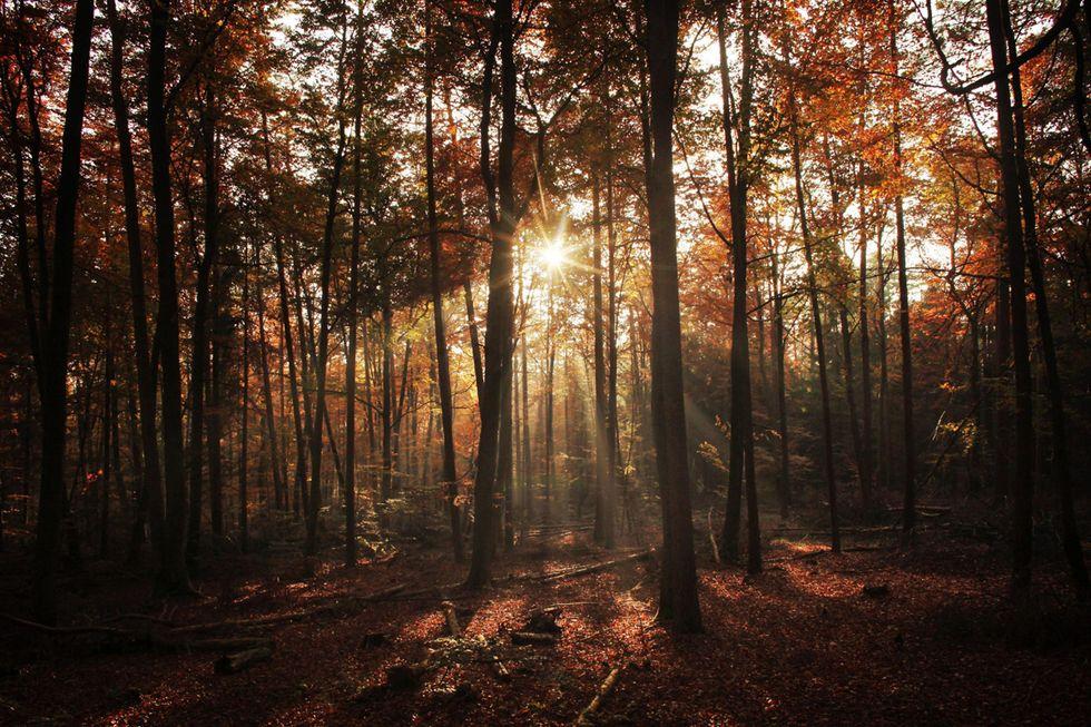 I colori dell'autunno: le foto più belle