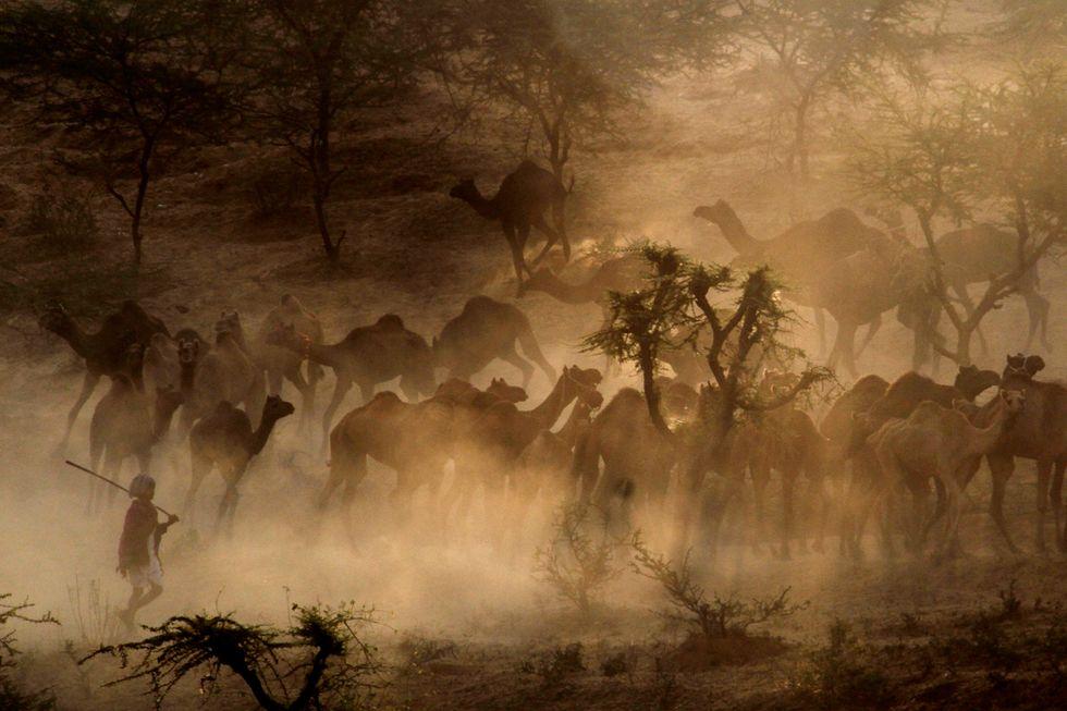 Alla fiera del bestiame di Pushkar, India