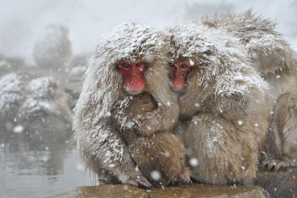 ANIMALI, le foto più belle di DICEMBRE