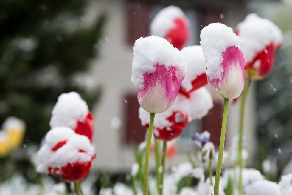 La neve di maggio: il ritorno dell'inverno al Nord