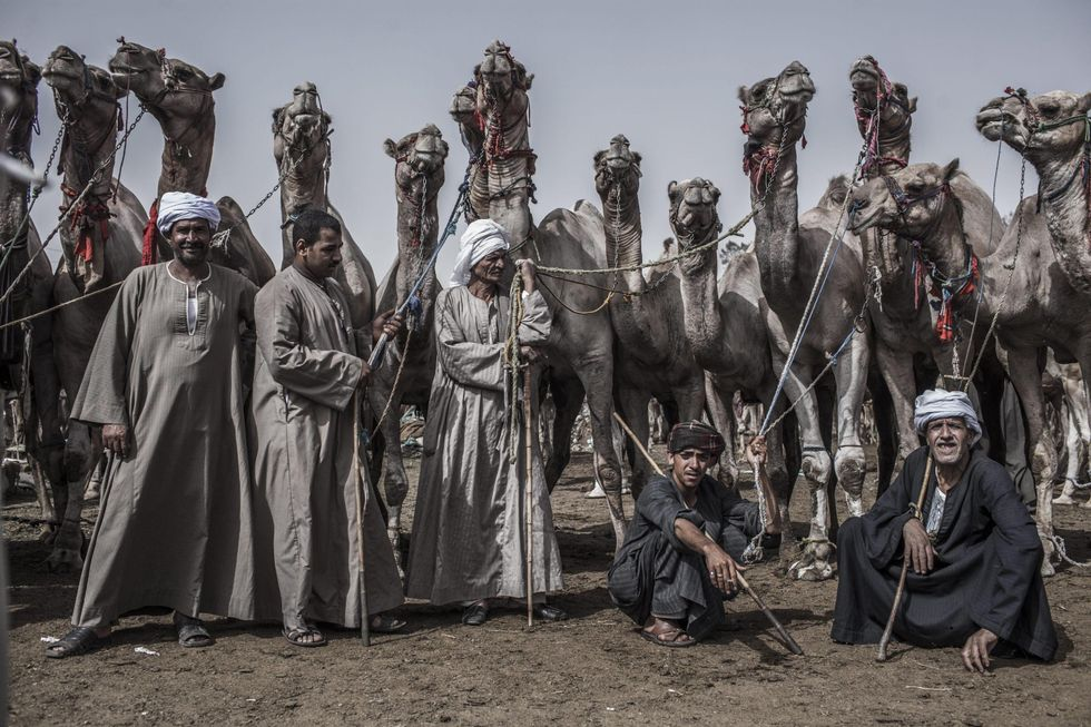 La fiera dei cammelli di Birqash