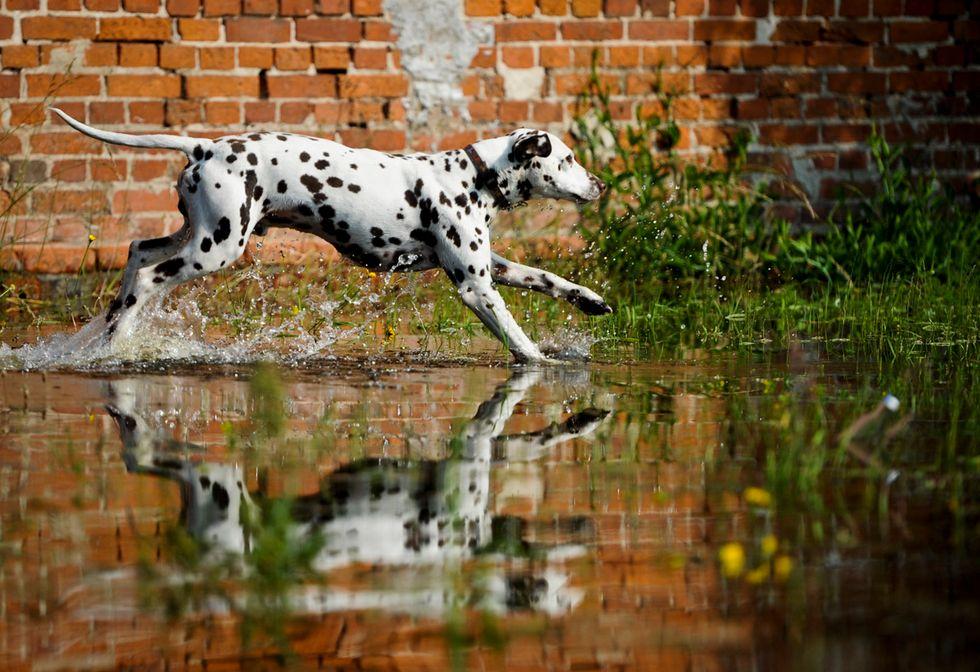 ANIMALI, le foto più belle di GIUGNO