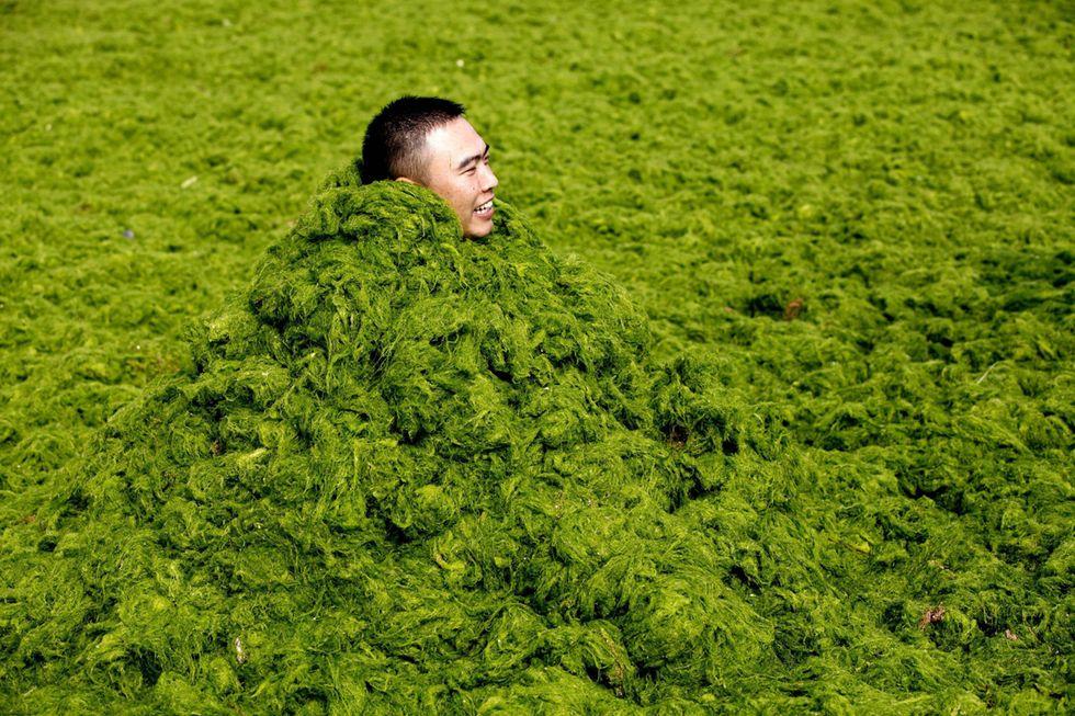 L'invasione delle alghe in Cina