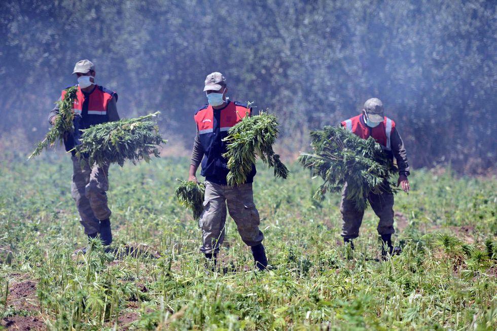 Guerra alla marijuana in Turchia e altre foto del giorno, 16.7.13