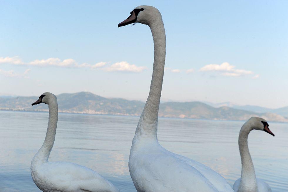ANIMALI, le foto più belle della settimana - 3/9 settembre