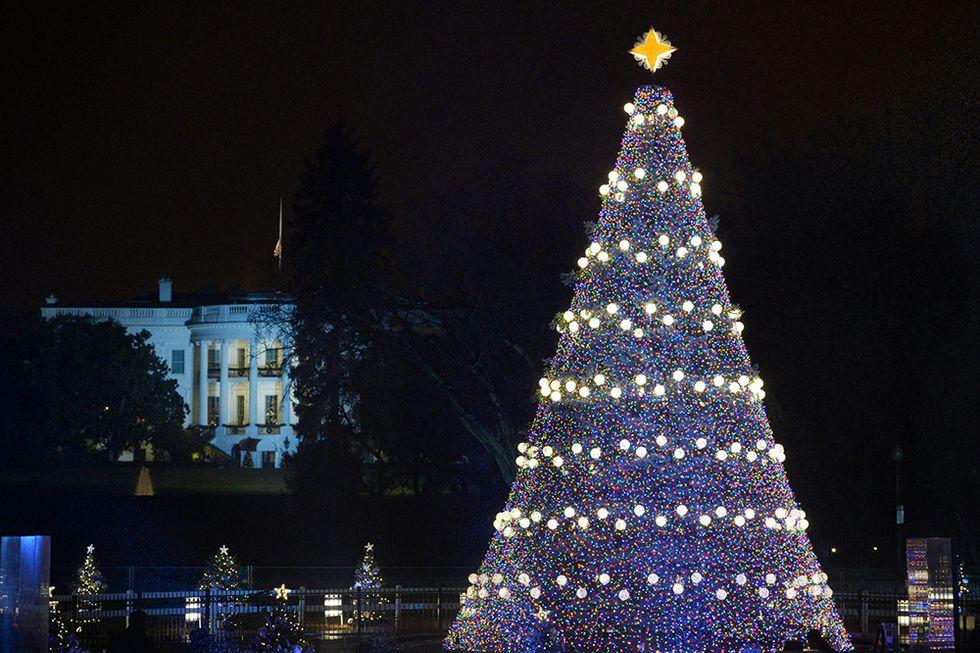 Gli alberi di Natale più belli