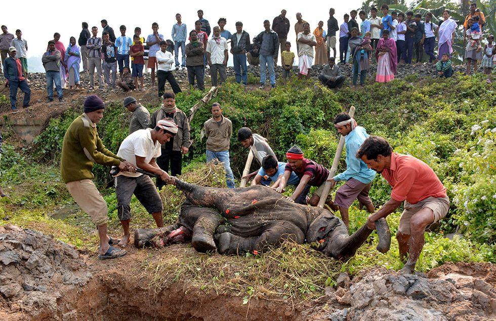 L'elefante travolto da un treno in India e altre foto del giorno, 20.12.2013