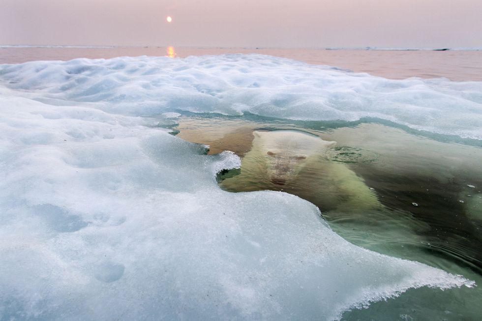 National Geographic Photo Contest 2013: le foto vincitrici