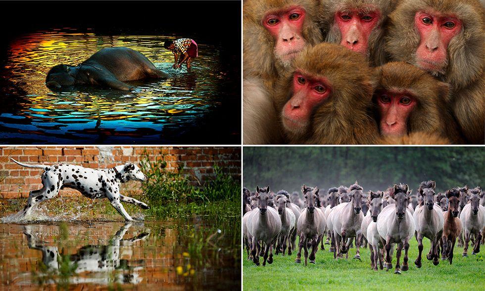Le foto più belle del 2013 - Animali