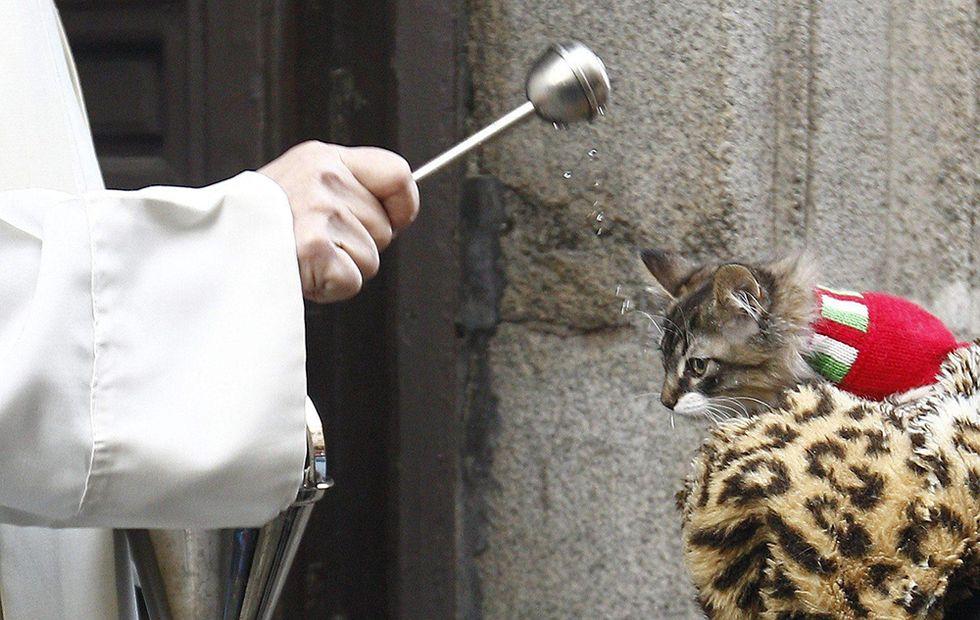 La benedizione degli animali a Madrid e altre foto del giorno, 17.1.2014