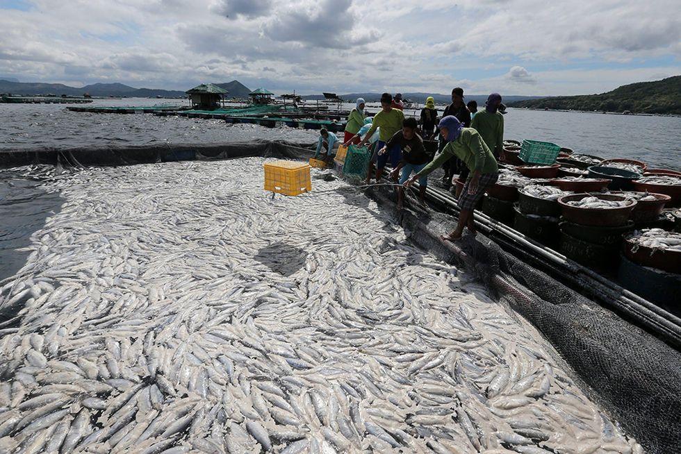 Moria di pesci nel lago Taal e altre foto del giorno, 22.1.2014
