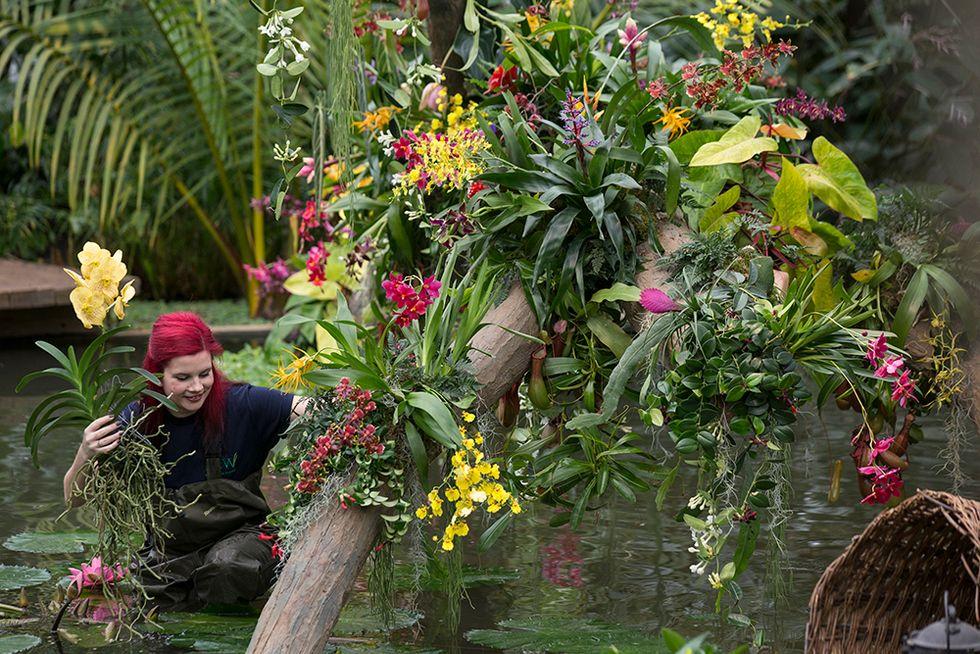 Festival delle orchidee a Londra