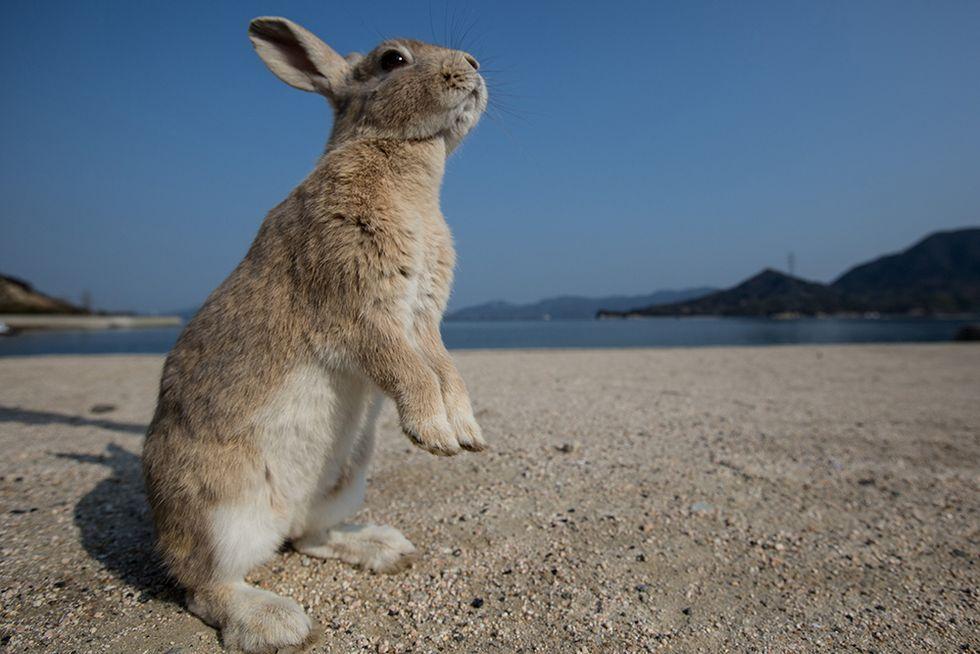 Okunoshima, l'Isola dei conigli