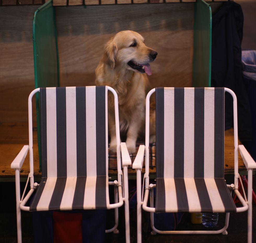 Diventare manager? Imparate dai cani