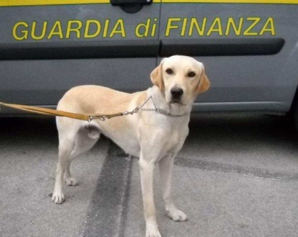 Tango, il cane da 7 milioni di euro