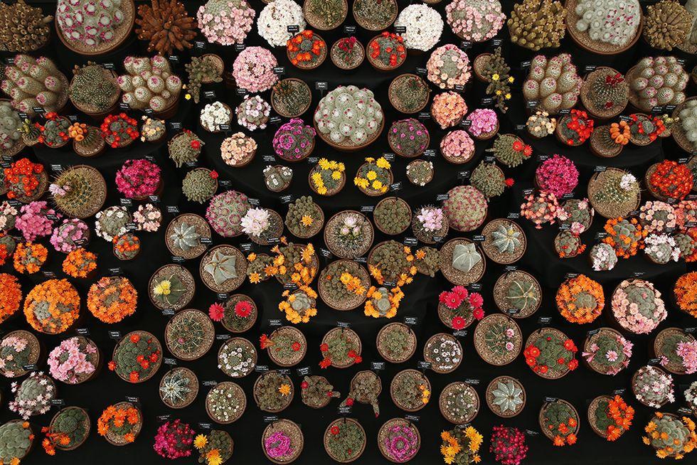 A Londra torna il Chelsea Flower Show