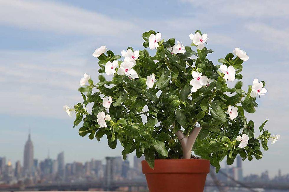 Parrot Flower Power: il sensore per le piante
