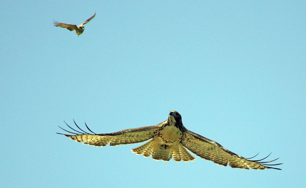 Ecco il più grande ostacolo per i droni di Amazon: gli uccelli