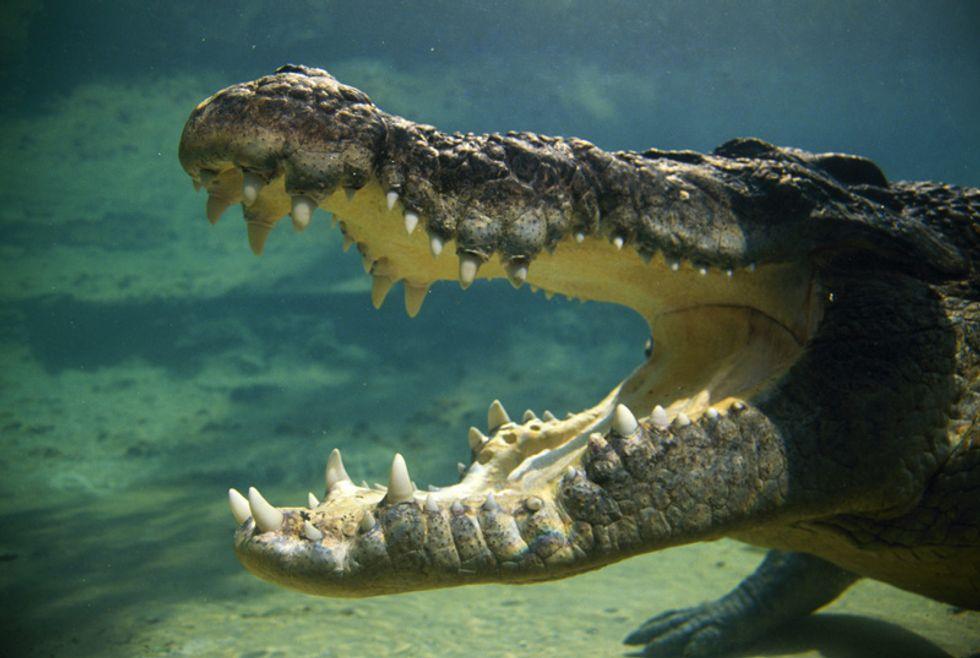 Nuotare con i coccodrilli