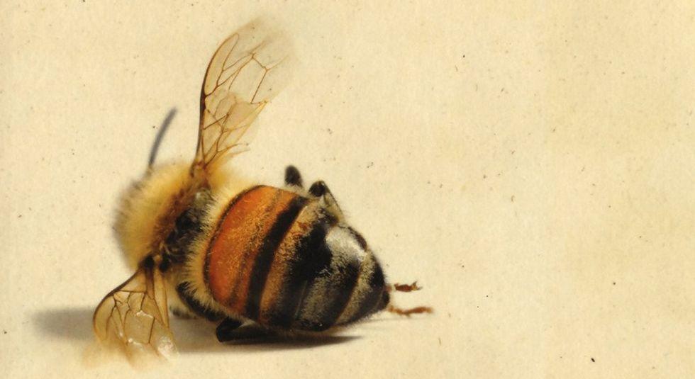 la-storia-delle-api-maja-lunde-marsilio