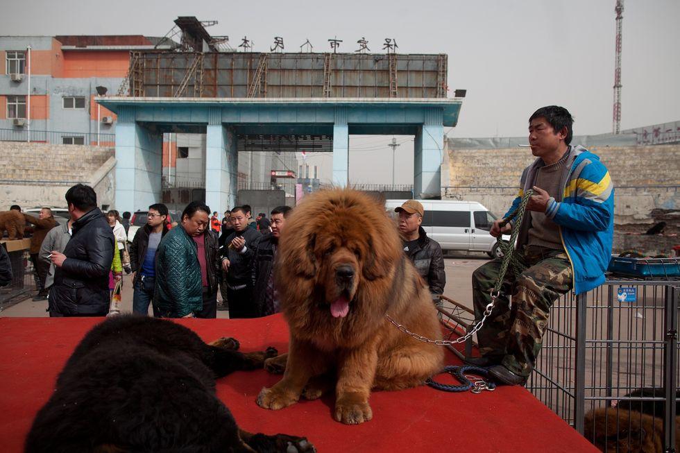 Il cane da due milioni di dollari