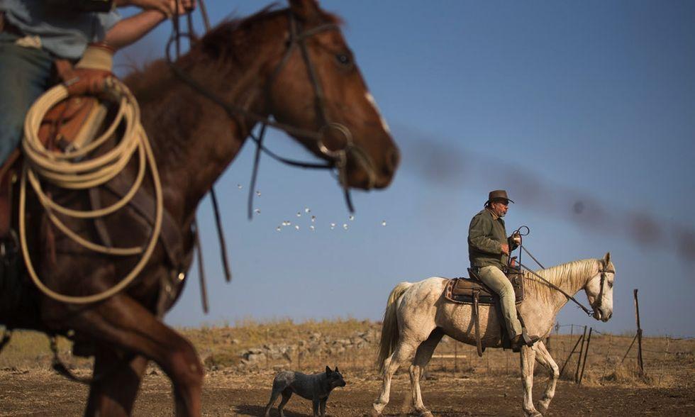 Il ritorno del cowboy