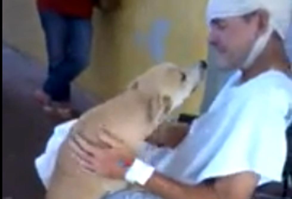 Il cane fedele aspetta 8 giorni il padrone ricoverato in ospedale