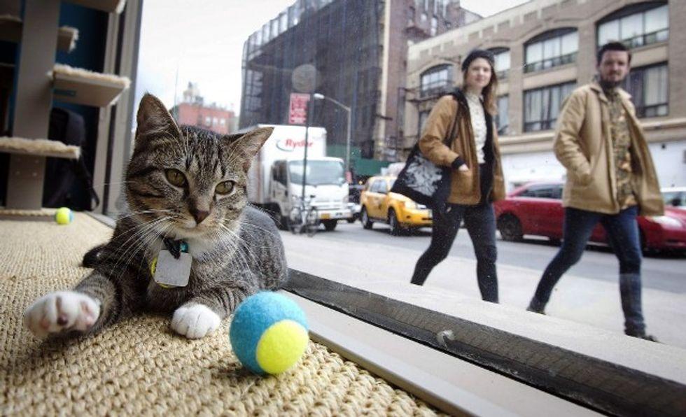 """New York, grande successo per il primo """"Pop Up Cat Cafè"""""""