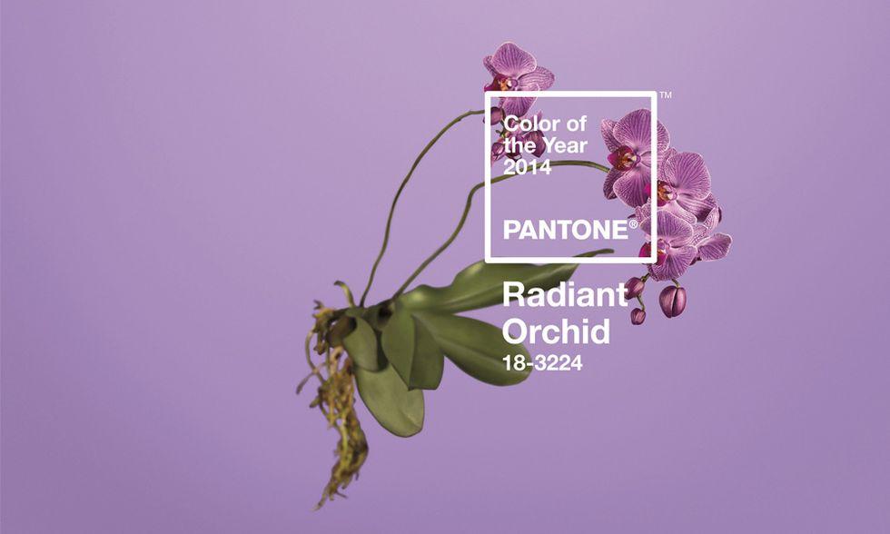 Il colore Pantone 2014 è il Radiant Orchid