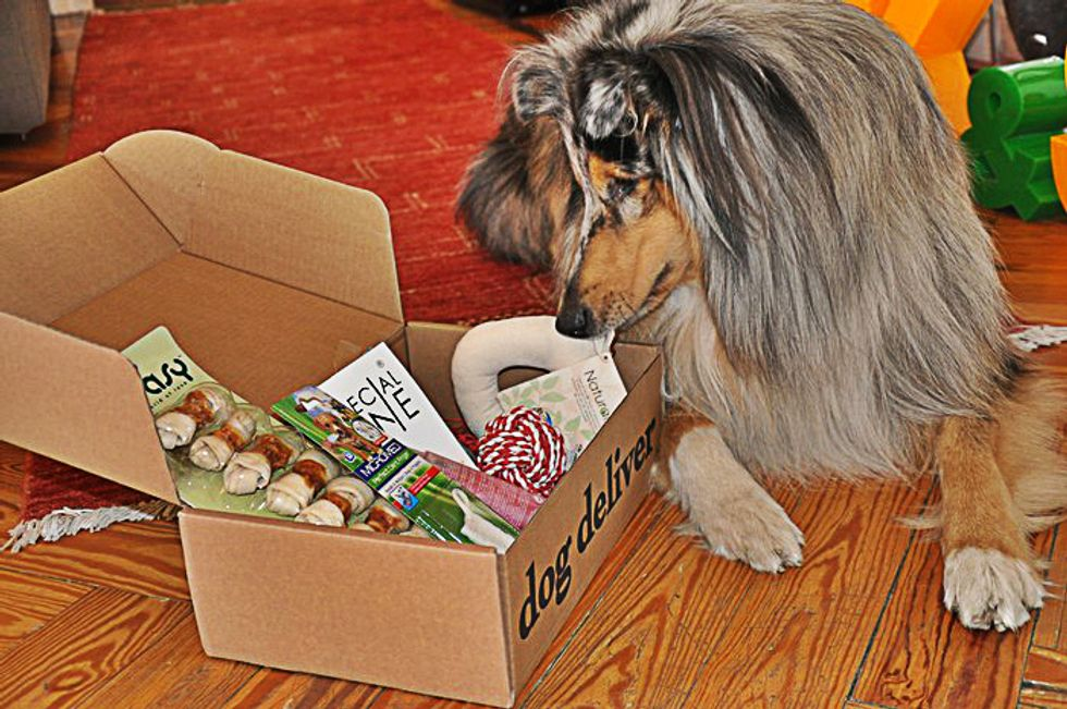 Dog Deliver, la scatola delle sorprese per cani (inventata da un cane imprenditore)