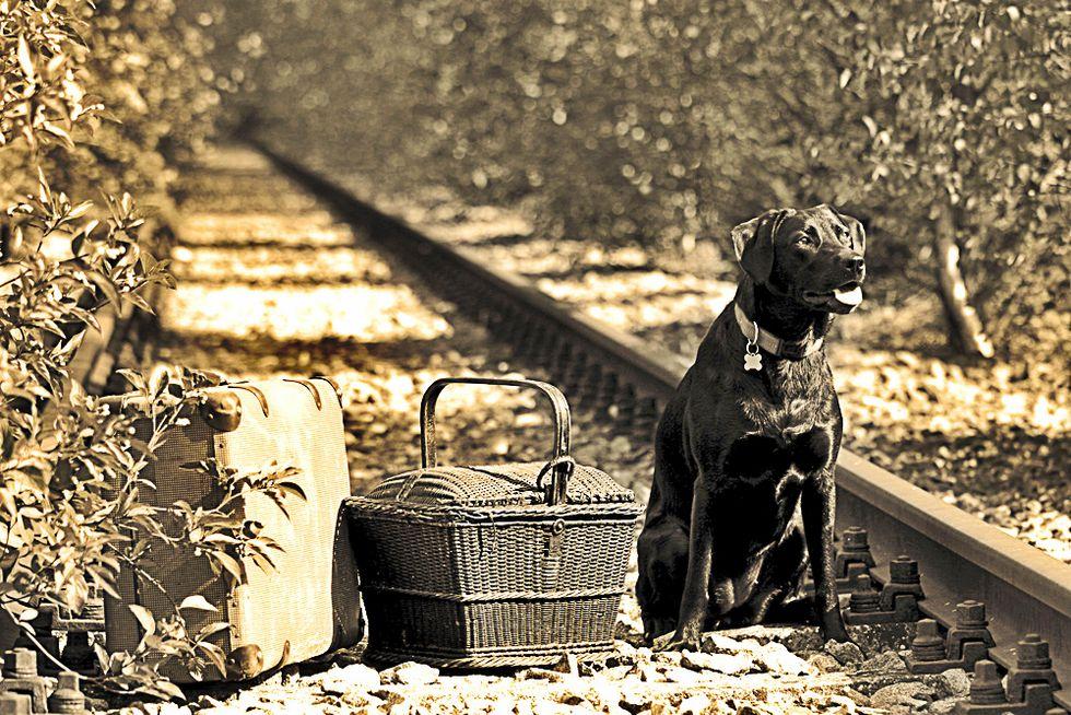 Mosca, la città dove i cani sono pendolari e viaggiano in metro