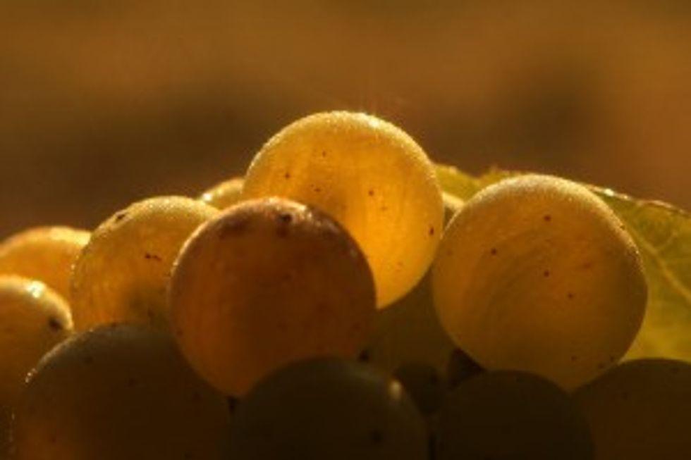 Vite vecchia fa buon vino