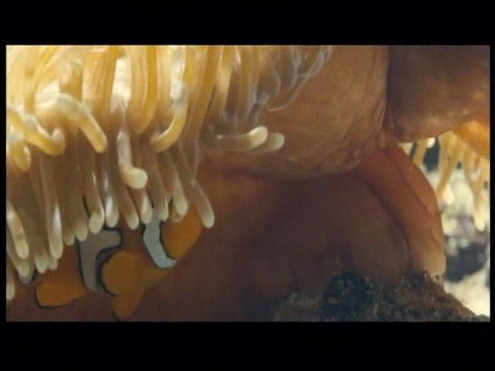 La vita negli oceani, video in esclusiva 2