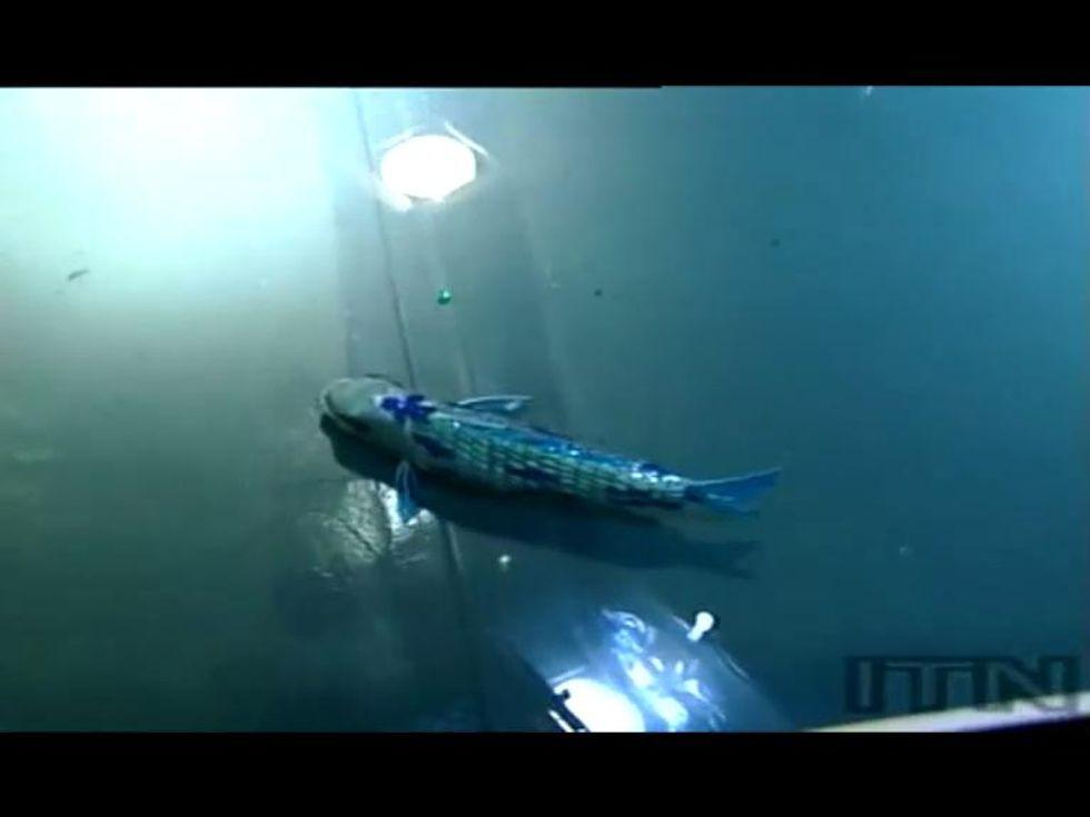 Ventimila robot sotto i mari - la carpa robotica