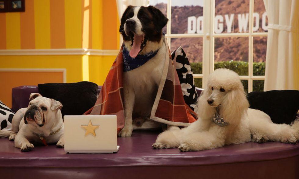 DoggyWood, sitcom a quattro zampe - Video del backstage