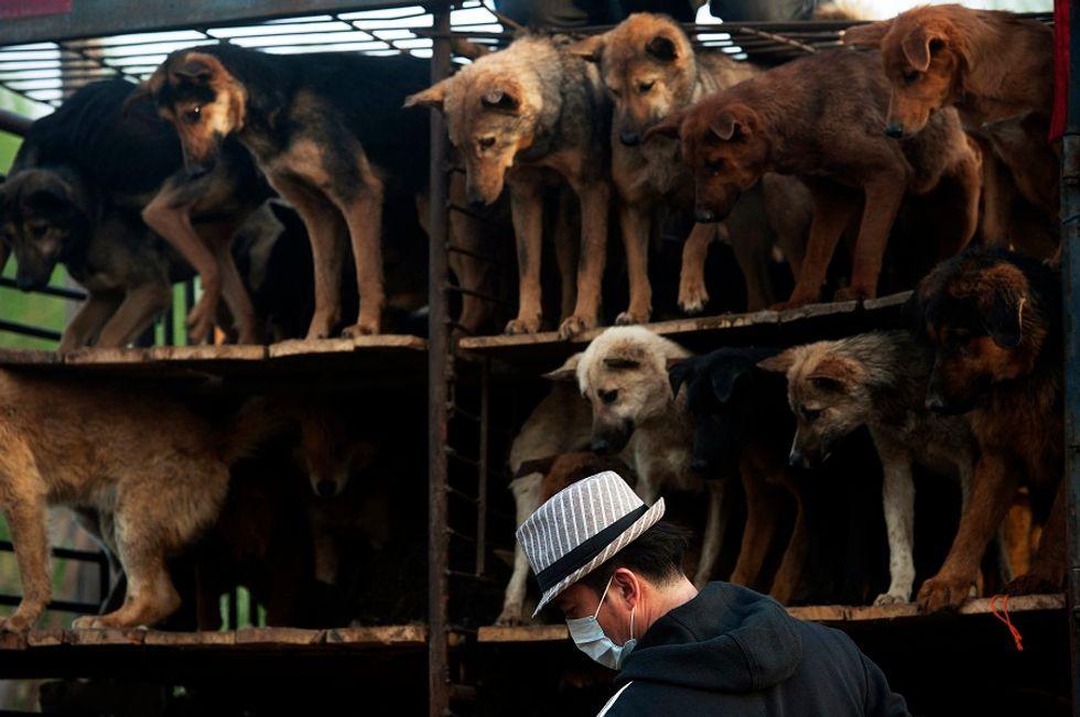 Cina, è polemica per il Festival della Carne di Cane