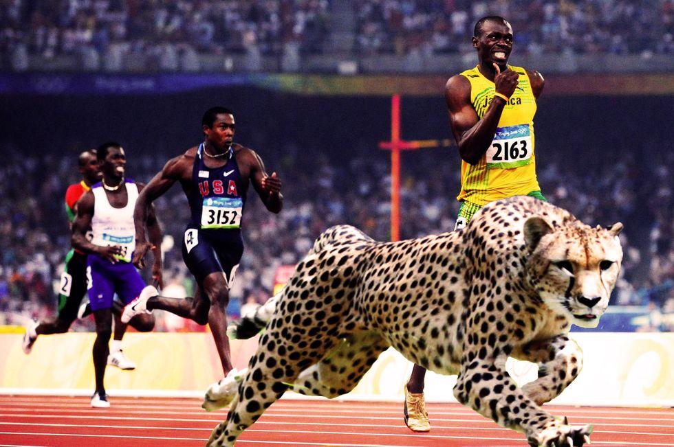 Olimpiadi. Animale batte uomo